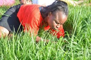 草を食べる 300x199 南アフリカのガソリン教祖のプロフィールと宗教団体情報!